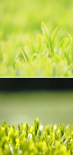 マリコール ブルーム イドロモス(スプレー化粧水)
