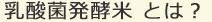 乳酸菌発酵米 とは?